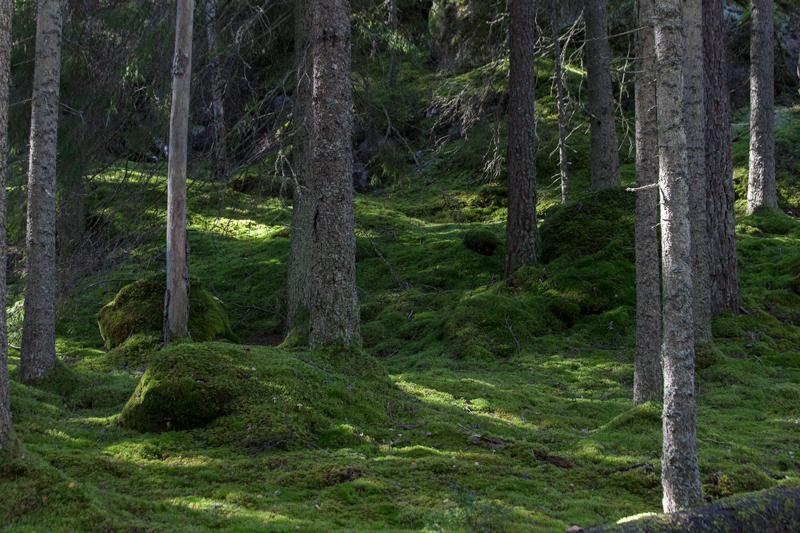 Tivedens Nationalpartk Etapp 17 Bergslagsleden